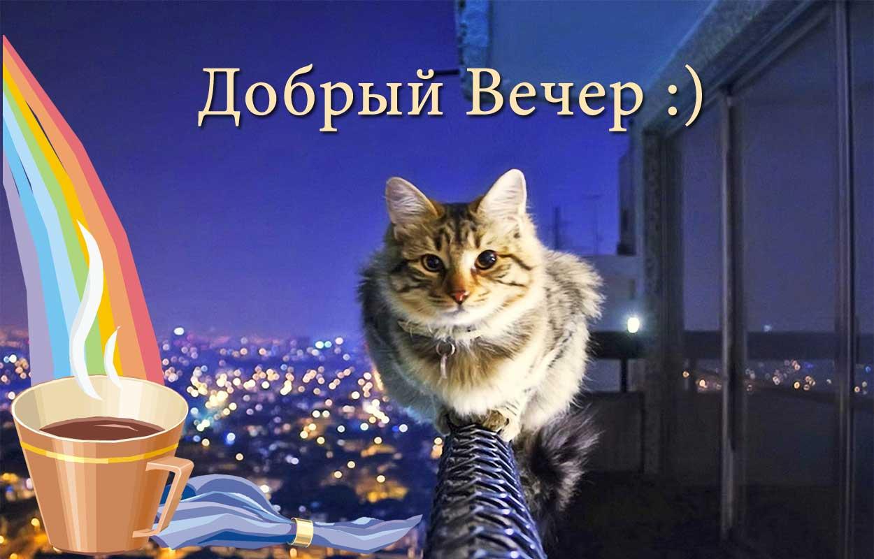 Смешная открытка с пожеланием доброго вечера