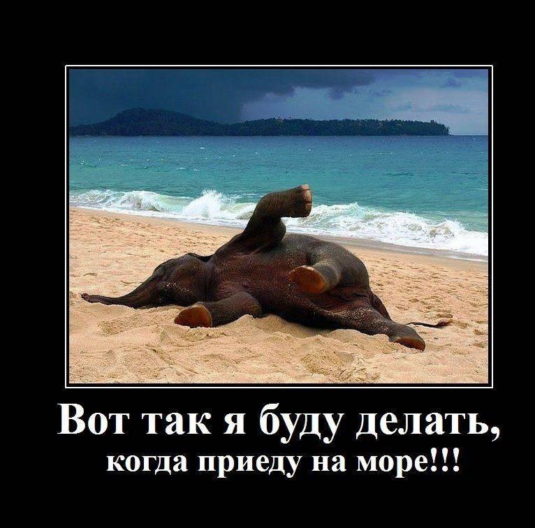 Приколы картинки про отдых на море, спорт