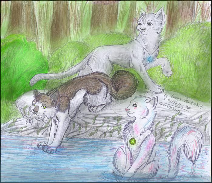 Рисунки карандашом коты воители для срисовки, очень красивая