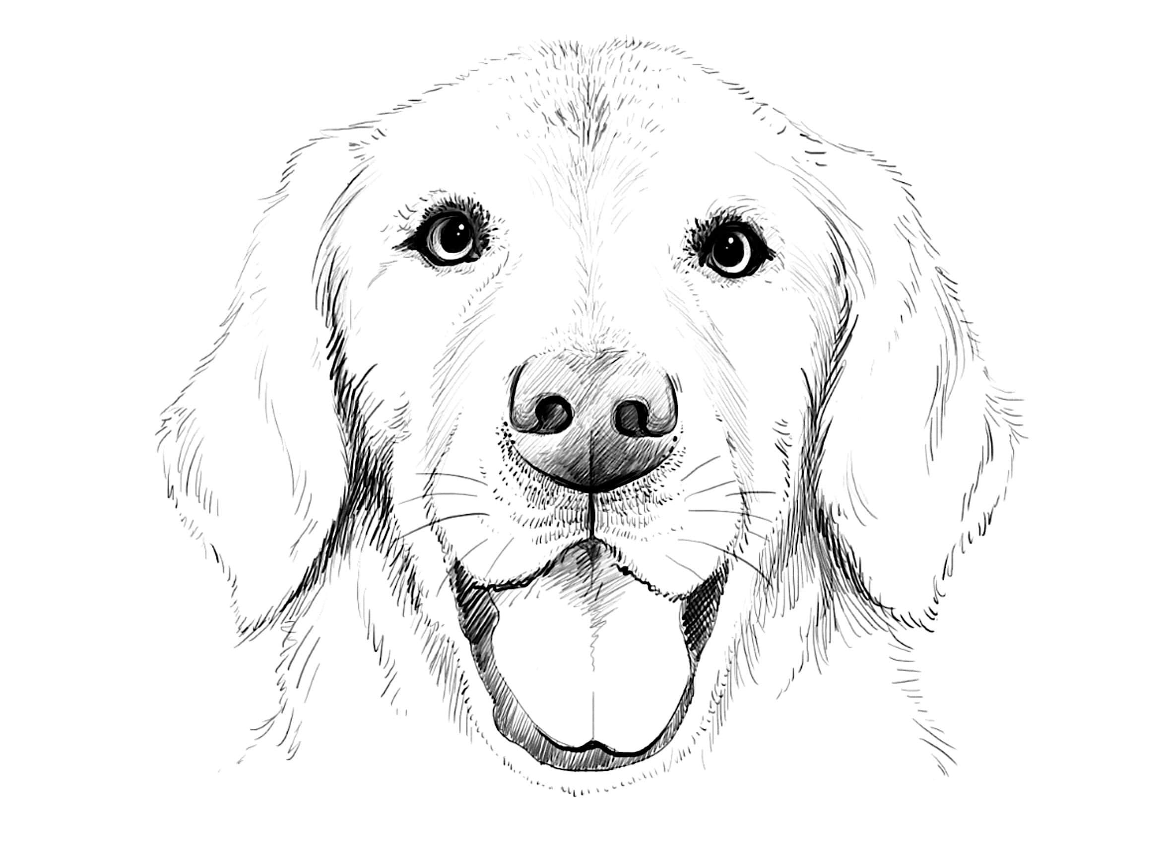 Картинки нарисованных собак для срисовки