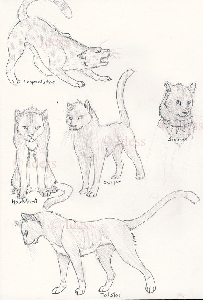 Днем рождения, картинки карандашом коты воители для срисовки