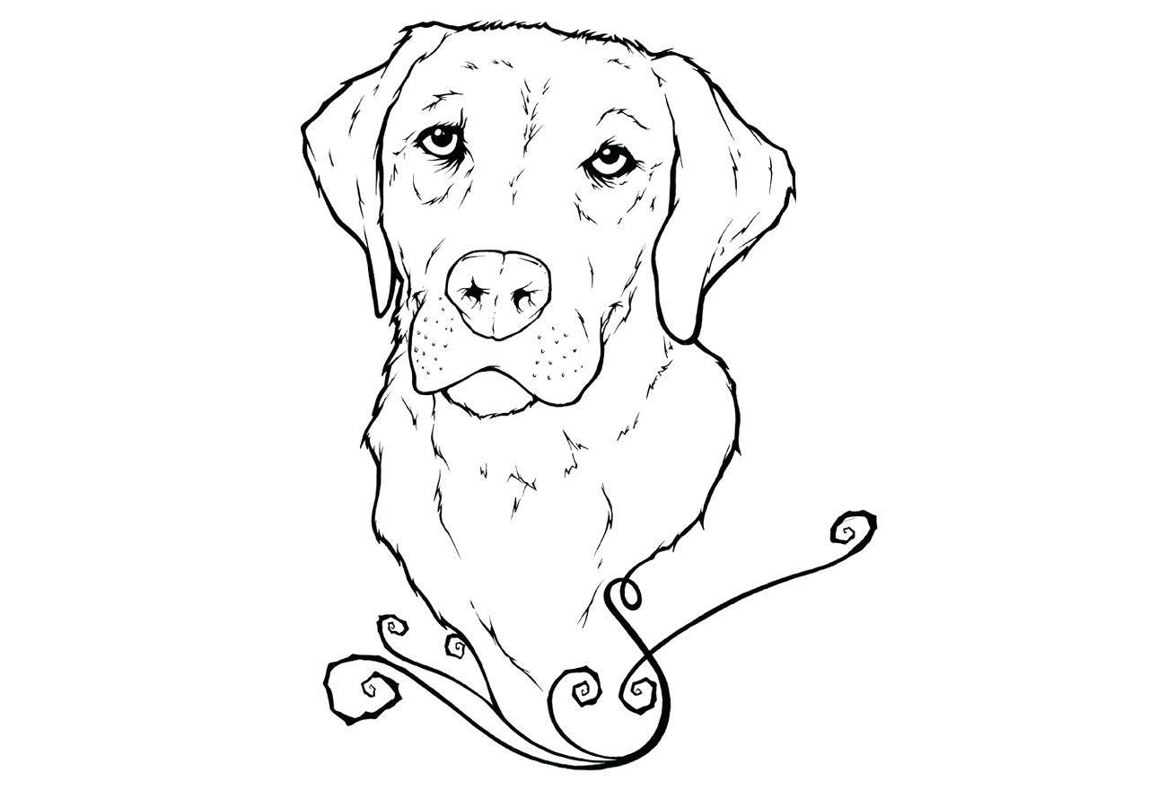 Открытки днем, картинка собаки для срисовки