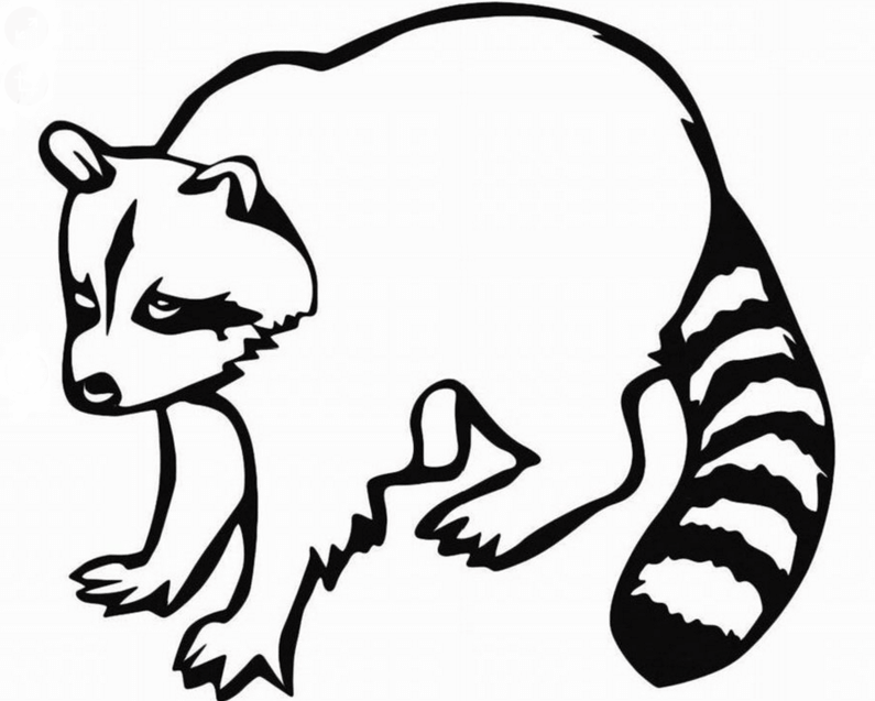 Рисунки животных карандашом для срисовки