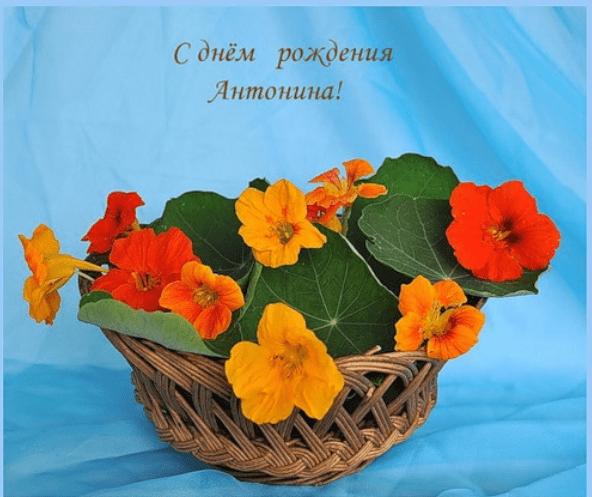 Картинка с днем рождения антонида, февраль открытки