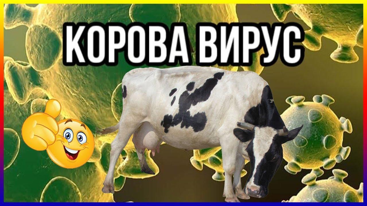Смешные картинки с юмором про коронавирус